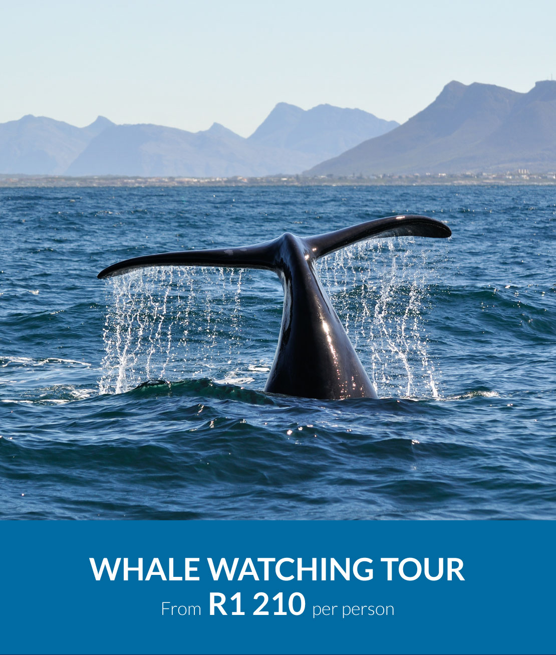 mouille-point-village-whale-watching